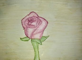 Maddie's Rose by handylight