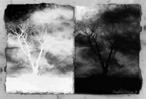 Remains From The Living Trees by IrondoomDesign