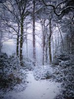 Stock: Winter snow in forest 2 by needanewname