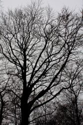 The shades of the branches by Manjsche