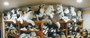 Plush Room Panorama - Douglas Cuddle Toy Wolves by LilMissAleu