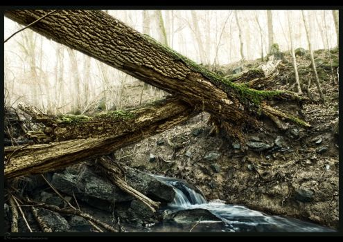 crossing trunks over runnel by MatzeR