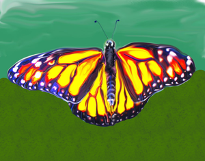 Painted Butterfly by MyOnlyRainbow