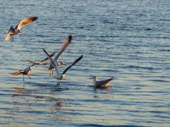 SunsetGulls by ecfield