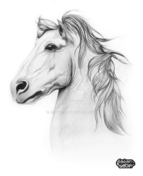 Horse Beauty by esaber