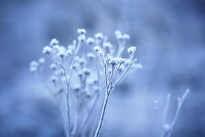 128 - Winter Blues II by ElyneNoir