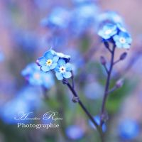 Blue Flower by AmandineRopars