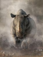 Charging Rhino by deskridge