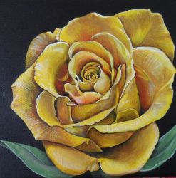 Yellow Rose by Launadoon