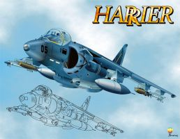Harrier by bandila