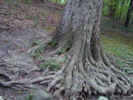 Rooted by itsayskeds