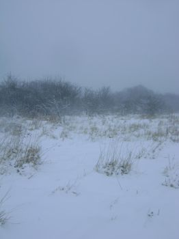 snowy fields -fog- 82 by dark-dragon-stock