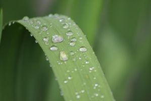 Raindrops on Green by StacySPhotography