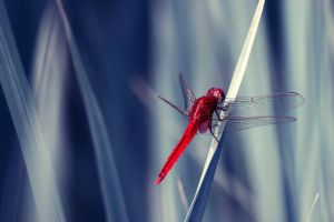 Dragonfly IV by stinebamse