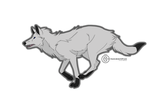 Running White Wolf by dragonlord-san