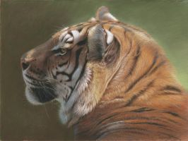 Tiger portrait pastel by wimke