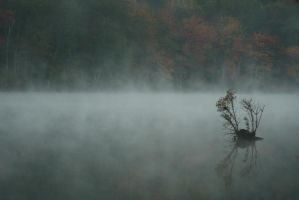Foggy Morning by froggynaan