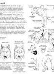 How to draw the Wolf - in Eng by Elruu