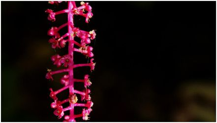 Pink by mtpPHOTO