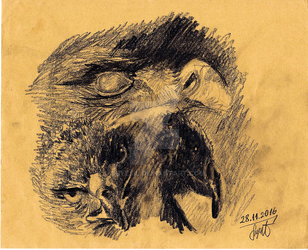 Eagle Charcoal Study  by Suyesil