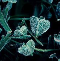 Cold heart by td-photography