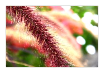 Fuchsia Spine by KevinStephens