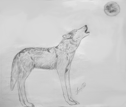 Wolf by Taina-dOS