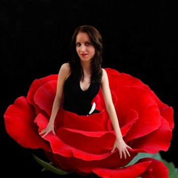 women in a rose by photonensauger