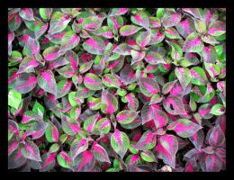 'psychedelic leaves'- donGbO by BolivianArt
