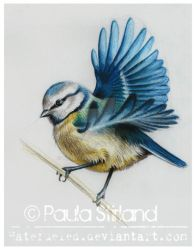 Blue Tit by hatefueled