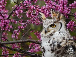 Owl in Bloom by Numoryn