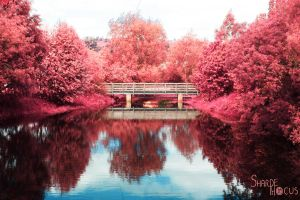 River of Pink by SharpePhocus