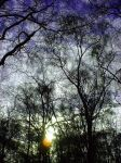 Tree Lace by Naturesview