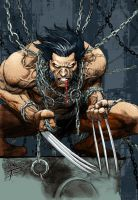 Wolverine by TommyPhillips