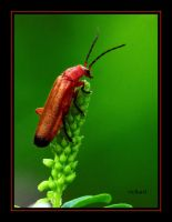insect by RichardRobert