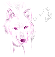 Wolf doodle by Ithfifi
