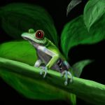 Red-eyed Tree Frog by My-Safe-Haven