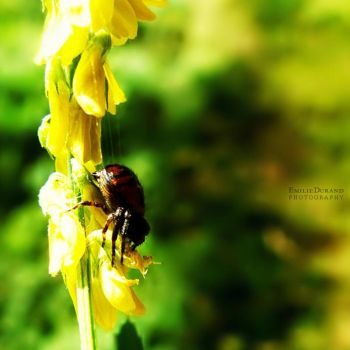 Red Back by EmilieDurand