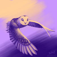 Barn-owl in 3 colors by Bestary
