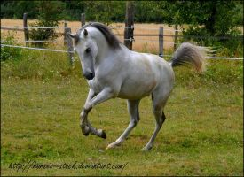 Garbo - Stock 14 by Horses--Stock