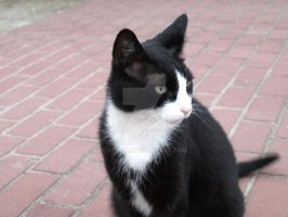 Kruemel, The Tuxedo Cat by Serylt