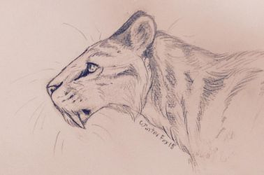 Homotherium sketchy sketch thingy 'kay by WinterFox18