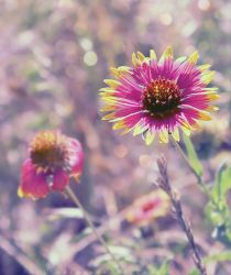 .:Just another Flower:. by SheilaMBrinson