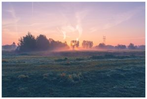 yes it was early I by corniger-aries