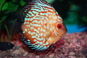 Tropical Fish - Stock by Sassy-Stock