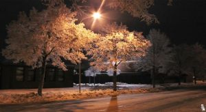 Illuminated Trees by wellgraphic