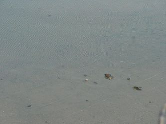 shallow water gulls by KCclearwater