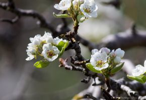 Blossom by ARC-Photographic