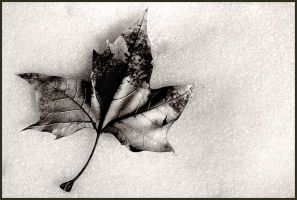 Leaf by Delacorr