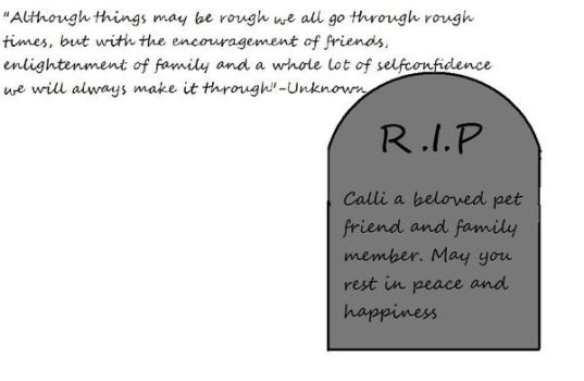 Calli may you rest in peace by wolfpup42